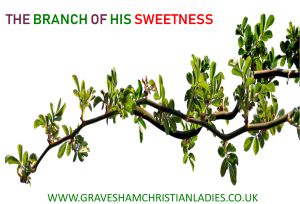Motherhood, Resources for women, Gravesham Christian Ladies, Women, Marriage, Bible study, Podcast for ladies, Conference, Women Conference, Christian Resources, Gravesend, Kent, Counselling for ladies, Women Bible study, Why Woman, O Lord?, His banner over me is love. The Branch of His sweetness